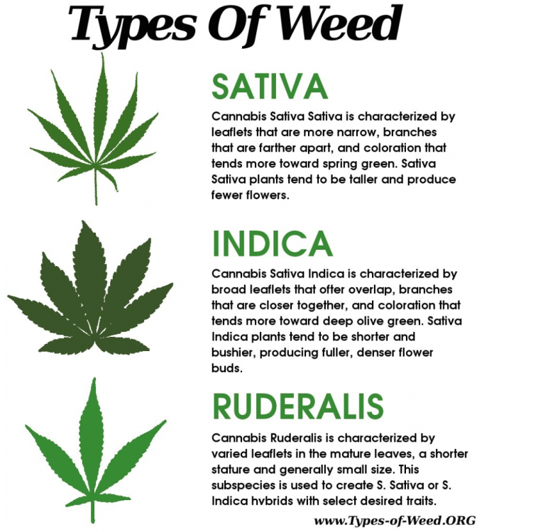 Types of weed- Sativa, indica, ruderalis.png