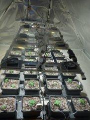 LED COB 2x280W | BioTabs | 24xAutopot | 4xAirdome