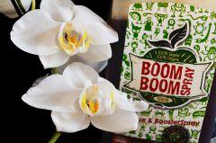 Storczyk I Bio Tabs Boom Boom obok