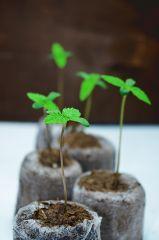Roślinki start życia