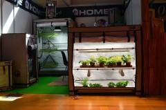Wystawka Spannabis 2016 Homebox