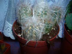 kaktusik:)