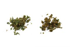 Jak palić Z vaporizera   medyczna marihuana susz Po inhalacji