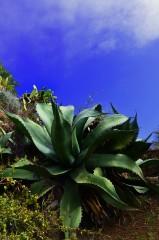 roślinność hiszpania