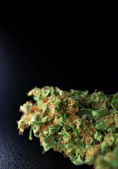 Super Lemon Haze topek 4