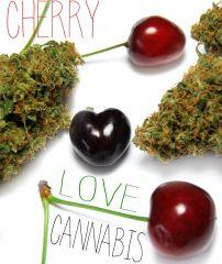 Cherry Love Cannabis