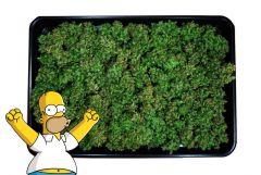 Homer I Super Silver Haze