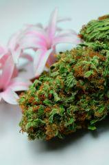 Cannabis & Hiacynt