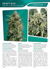 Advanced seeds page 016