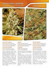 Advanced seeds page 022