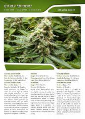 Advanced seeds page 014