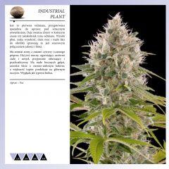 Dinafem 2013   Polaco page 034