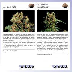 Dinafem 2013   Polaco page 039