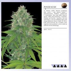 Dinafem 2013   Polaco page 031