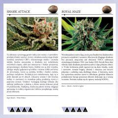 Dinafem 2013   Polaco page 038