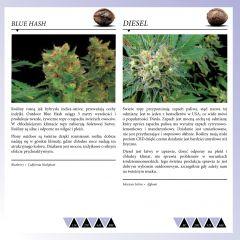 Dinafem 2013   Polaco page 037