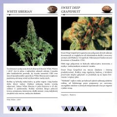 Dinafem 2013   Polaco page 040
