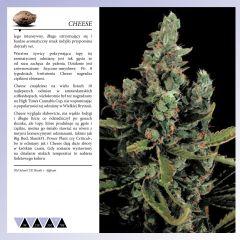 Dinafem 2013   Polaco page 032