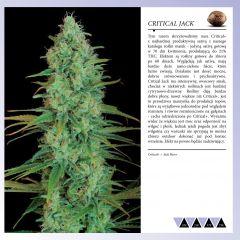 Dinafem 2013   Polaco page 033