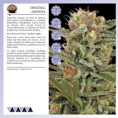 Dinafem 2013   Polaco page 028