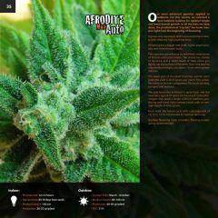kannabia catalog english (1) page 035