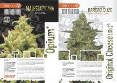 paradise seeds katalog polski page 009