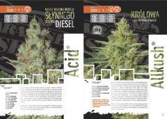 paradise seeds katalog polski page 003