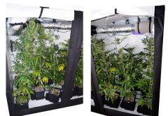 Super Silver Haze, Super Lemon Haze, Critical + Special Kush BioTabs Air Dome 600w 72 dzien Box SSH SLH 11str