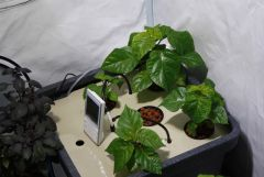 hydrohobby fotorelacja chilli 2015 ziemia Vs hydro aerofarm (2)