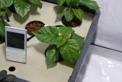 hydrohobby fotorelacja chilli 2015 ziemia Vs hydro aerofarm (7)