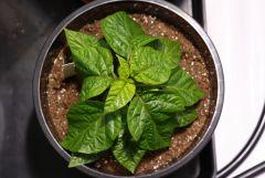 hydrohobby fotorelacja chilli 2015 ziemia Vs hydro (18)