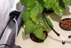hydrohobby fotorelacja chilli 2015 ziemia Vs hydro (23)