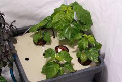 hydrohobby fotorelacja chilli 2015 ziemia Vs hydro (33)