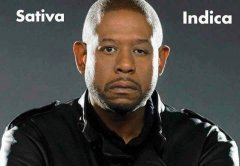 forest-whitaker-sativa-indica-weedmemes.jpg