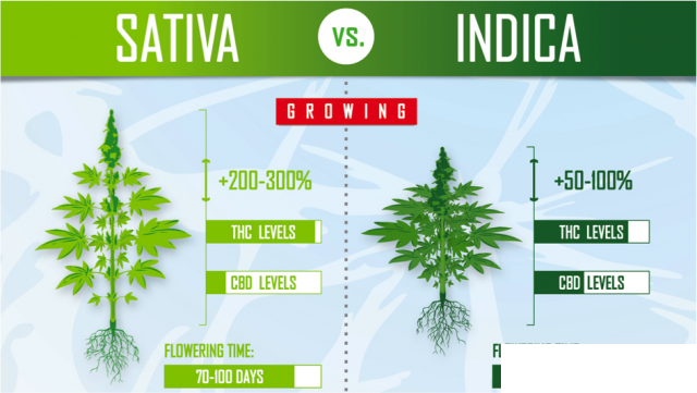 Sativa-Vs-Indica-Flowering-time.png