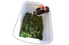 RSO z odpadu konopi (2).jpg