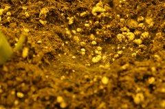 Pleśń na glebie 2.JPG