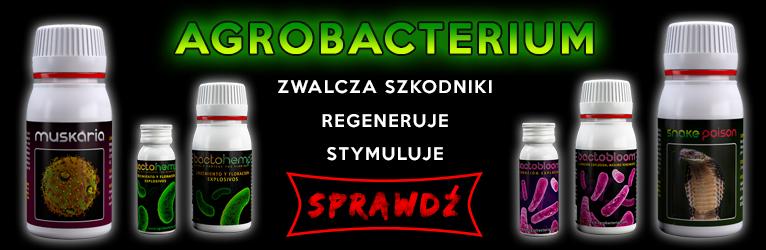 1749832876_Agrobacterias-grower_com_pl.jpg.7a7e821d7e67b5c75805d6c704cf34f8.jpg