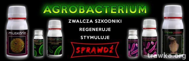 Agrobacterias - grower.com.pl.jpg