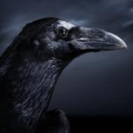 raven4554