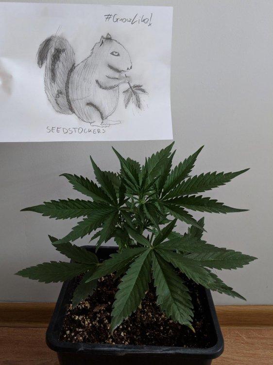 seedsstockers.jpg