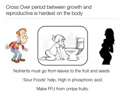 nutritive-cycle-10.jpg
