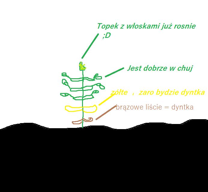 dyntka.png