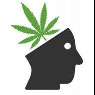 CannabisKing