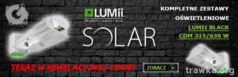 lumii_solar_2020.jpg